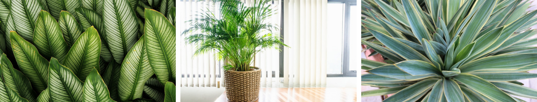 Groene-kamerplanten-kopen-den-haag